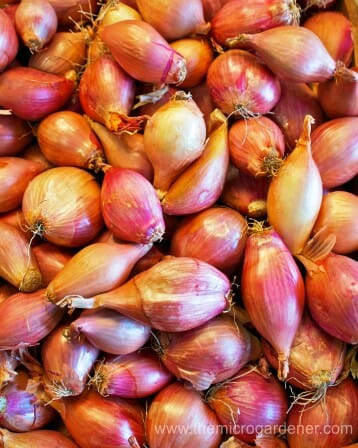 Small shallot bulbs.