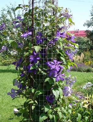 Клематис фото в саду – фото, видео оформления сада разными сортами древовидных лиан
