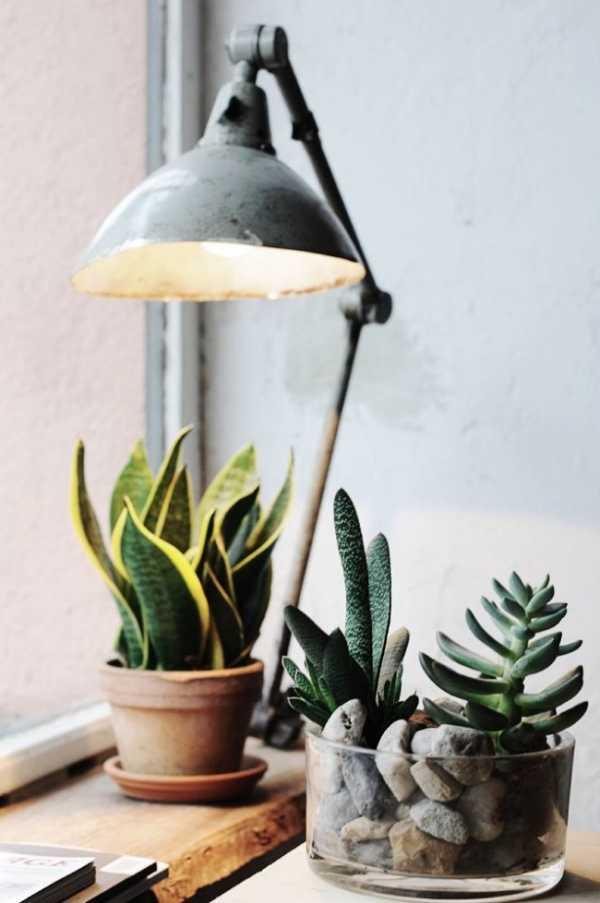 Лампы для досветки растений – Правильные лампы для подсветки цветов и  растений — Сибирский процвет — школа Чудопал