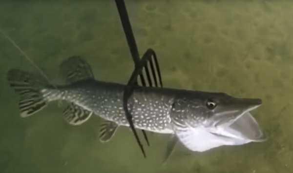 Рыбалка с острогой статья и штраф